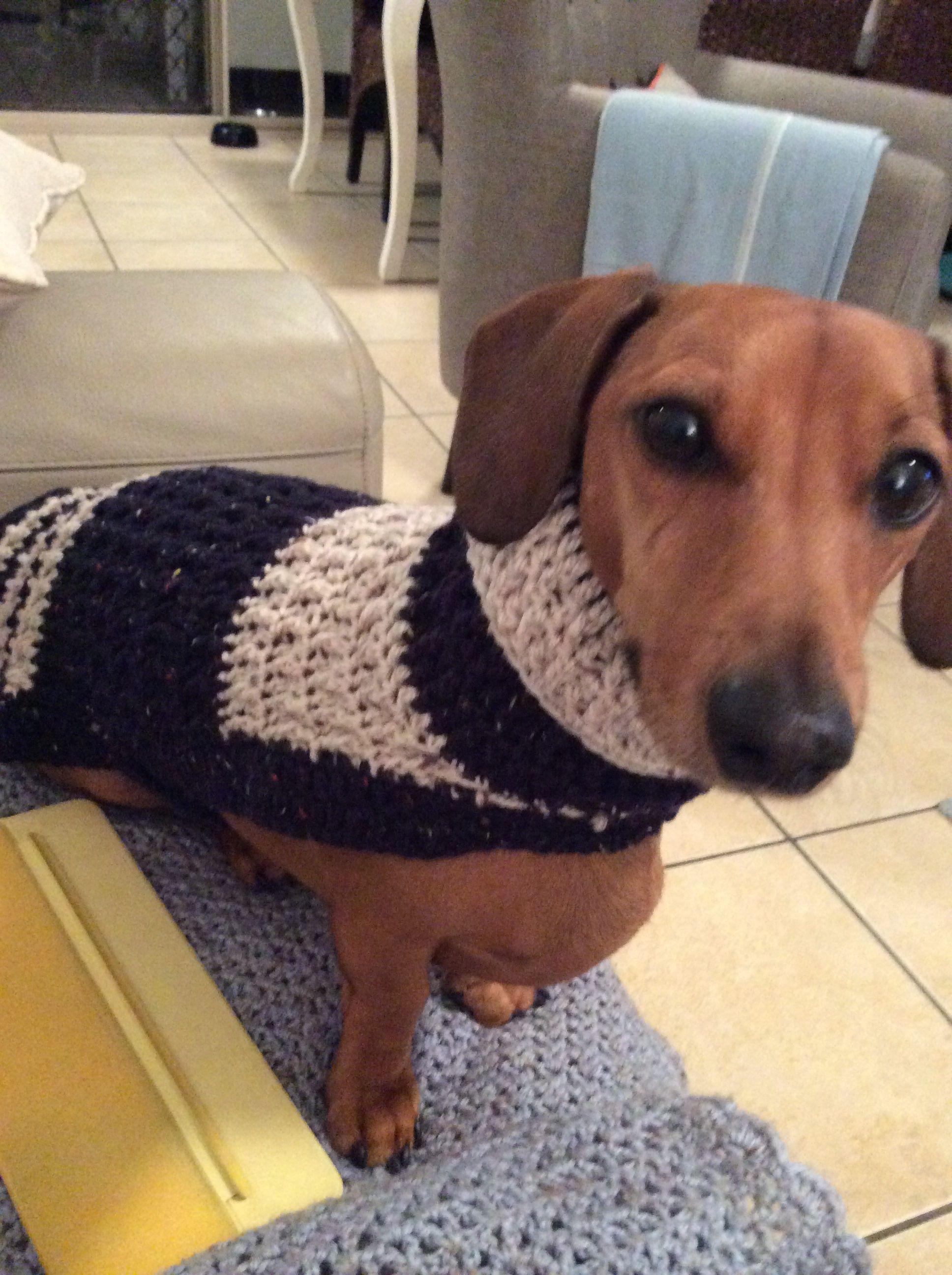 Dog Coats Made Specifically For Dachshunds Crochet Dog Clothes