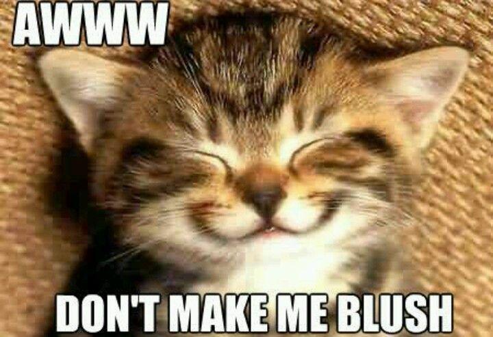 b282070f22d8d03db4198f67f13fb6a7 blushing kitty cute animals ( pinterest kitty, cat and animal