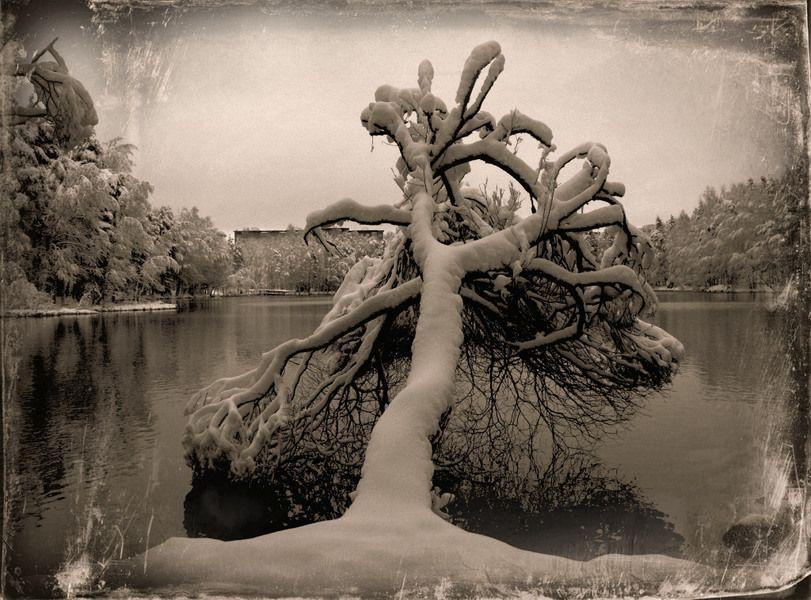 Trees - Kuvat