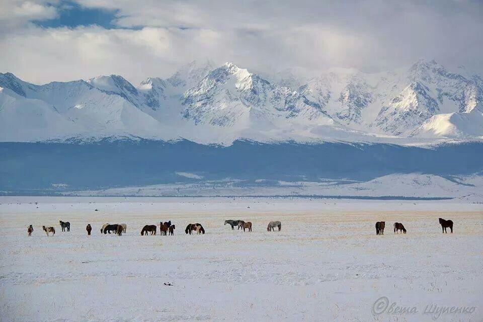 Ata Yurdumuz Altay Daglari