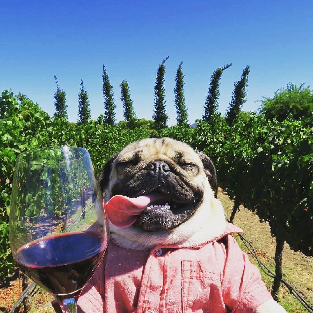 Sunday Funday Wine Meme
