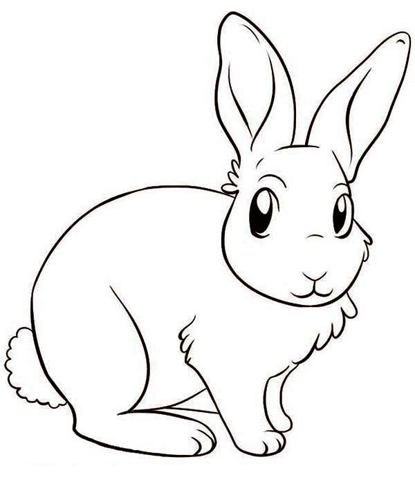 Amazing Bunny Drawing Bunny Coloring Pages Bunny Drawing Animal Coloring Pages