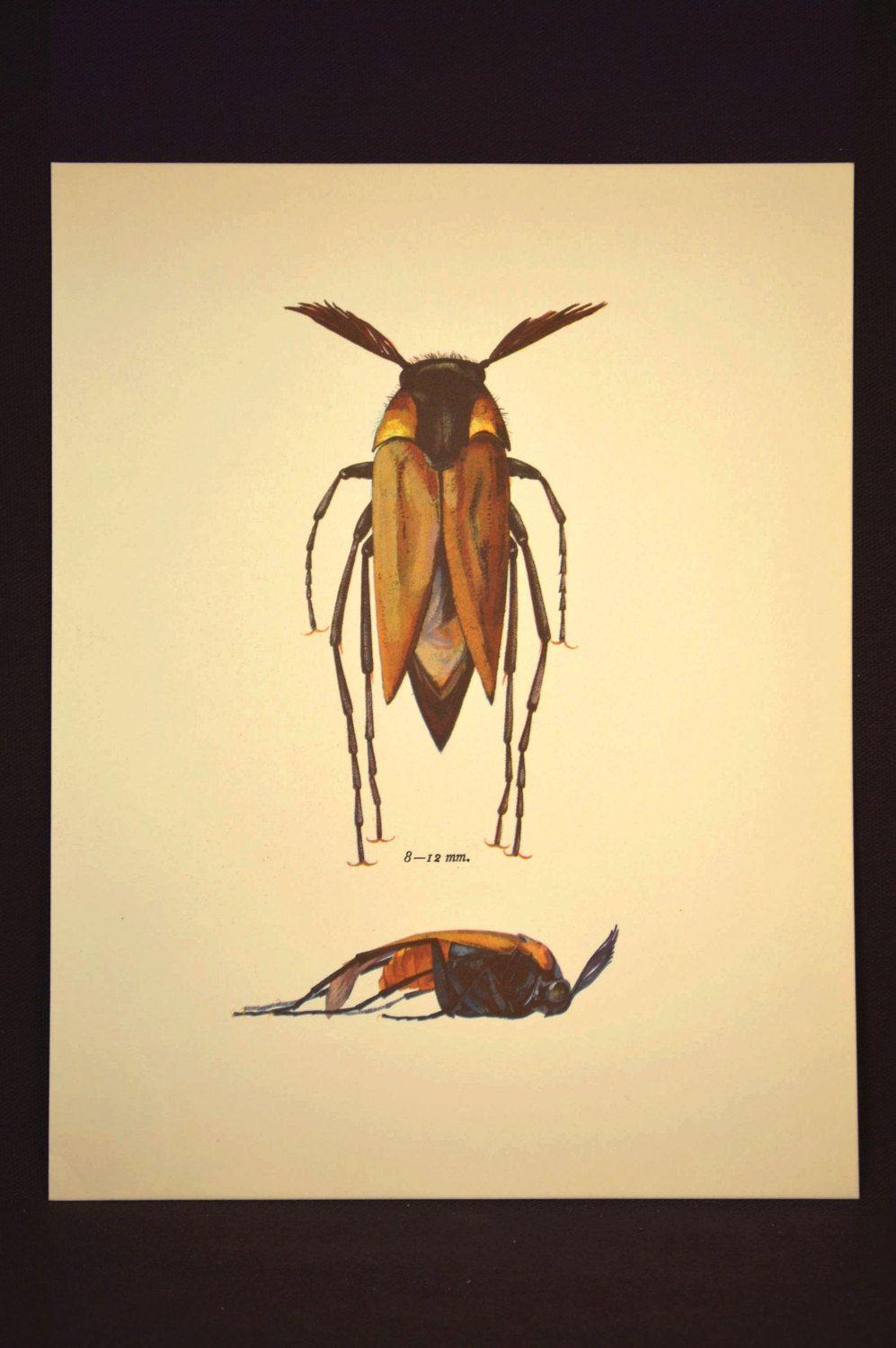 Nature Wall Decor Insect Print Beetle Decor Art Bug Vintage | Nature ...