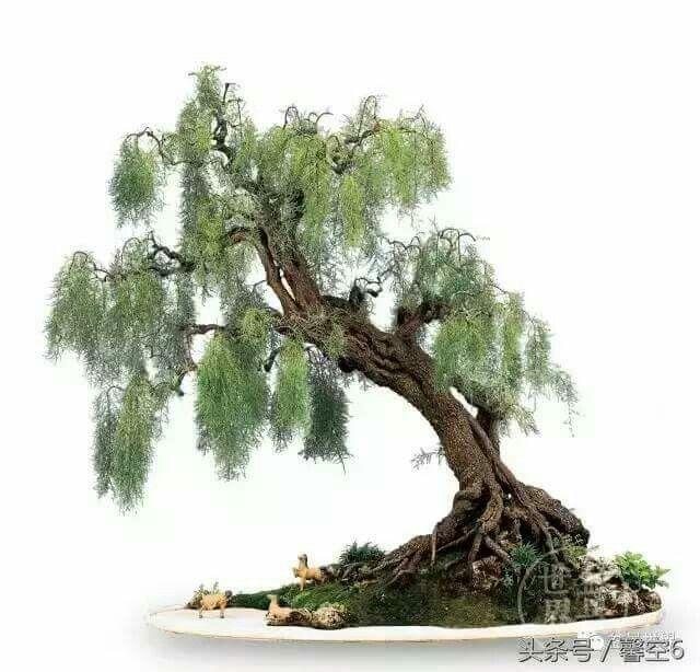 pin by bagus wijaya on bonsai bonsai baum garten. Black Bedroom Furniture Sets. Home Design Ideas