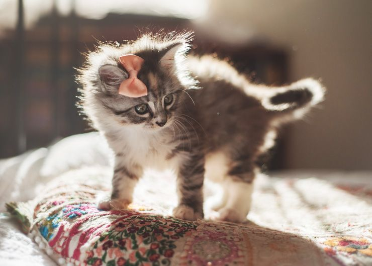 adorable kitten with a bow