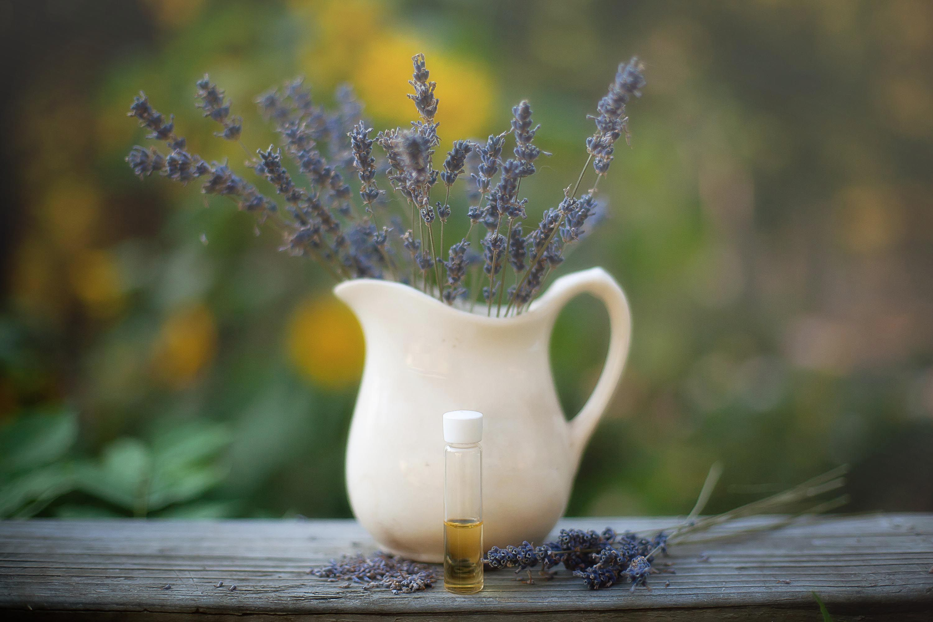 Does Lavender Oil Repel Fleas Fleas, Essential oils kill