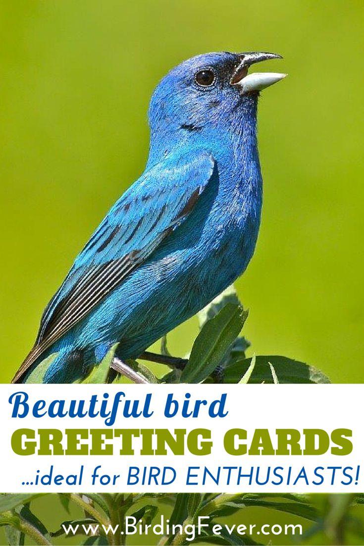Beautiful Bird Greeting Cards Gift For Bird Lovers Beautiful Birds