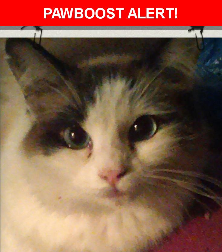 Please spread the word! Ming Ming was last seen in Santa Rosa, CA 95404.    Nearest Address: 1030 Aston Circle, Santa Rosa, CA, United States