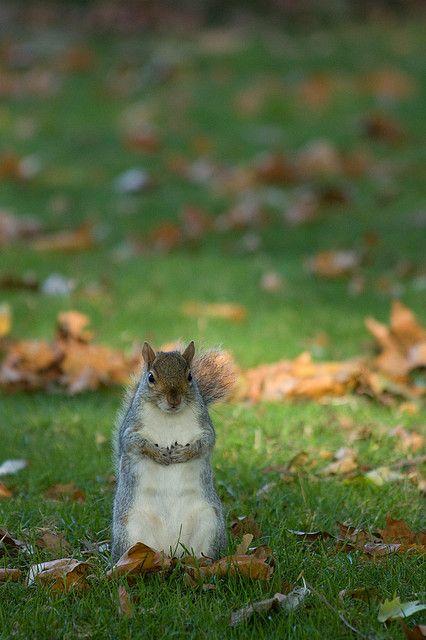 Cute Squirrel With Images Cute Squirrel Cute Animals Squirrel
