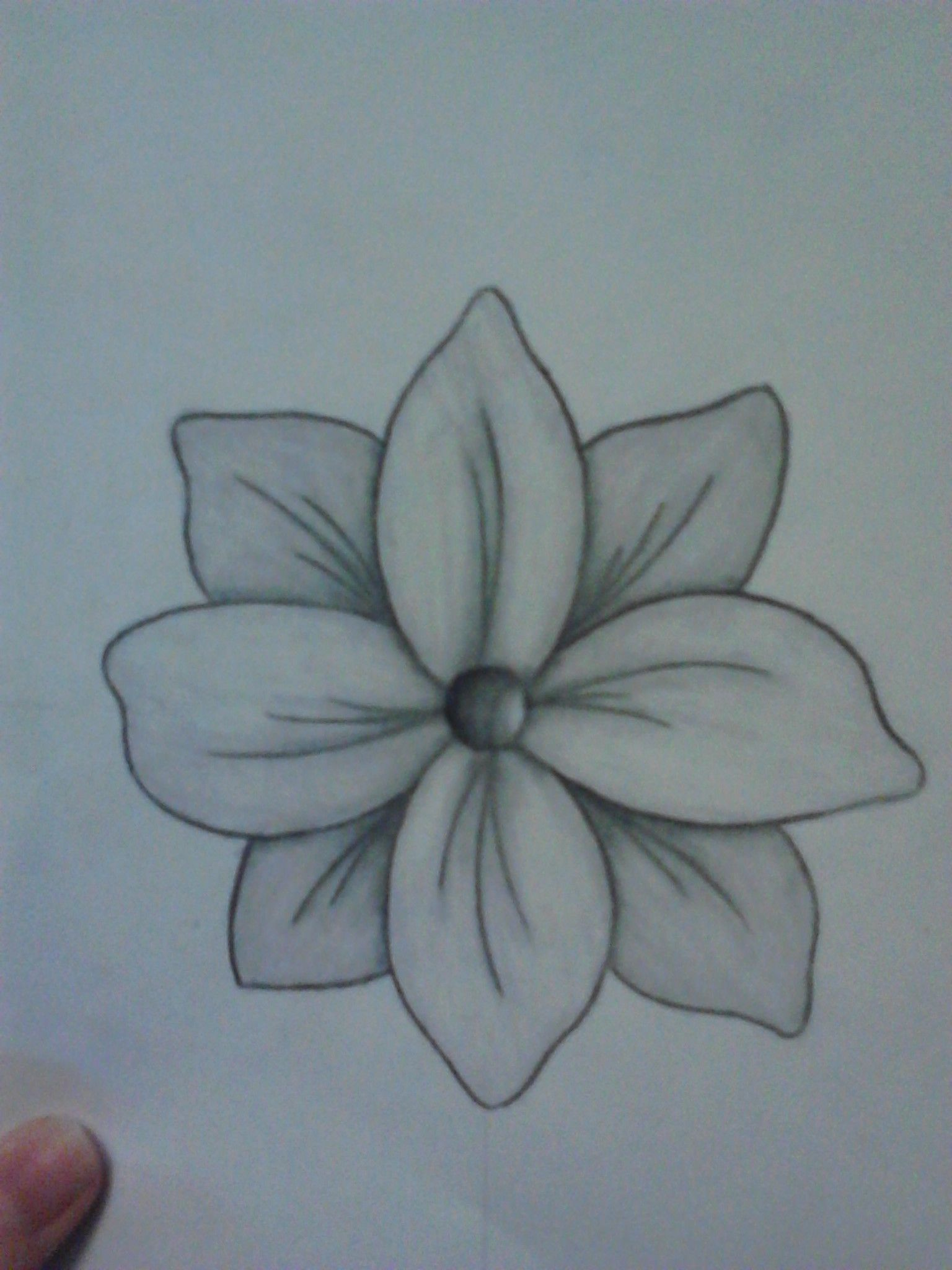 Flower Pencil Drawing Drawn By Lindsey Chapman Pencil Drawings