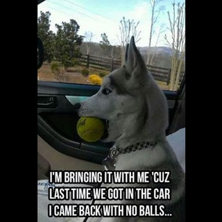 Help Us Spay Neuter 5 Owner Surrenders Funny Dogs Funny Animal Pictures Funny Animals