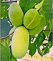 Photo of Obstbäume
