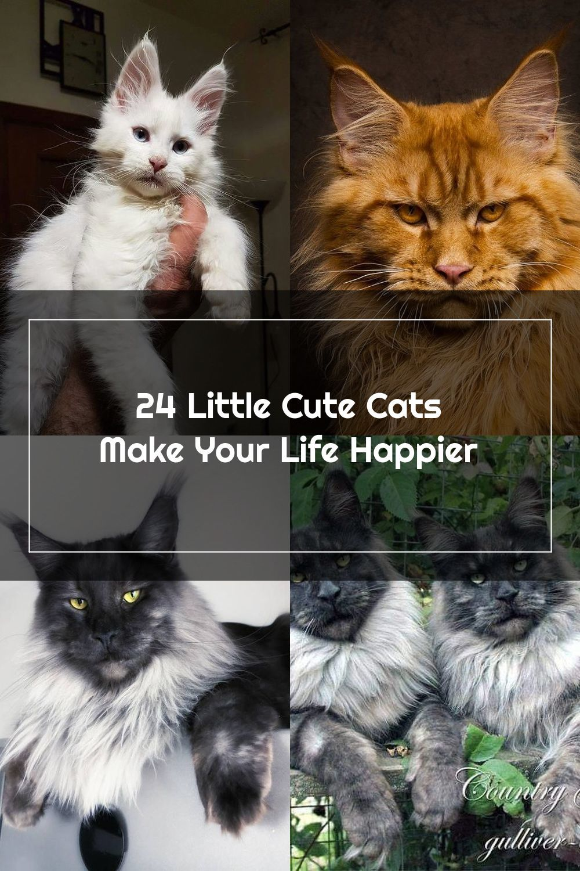 24 Little Cute Cats Make Your Life Happier En 2020