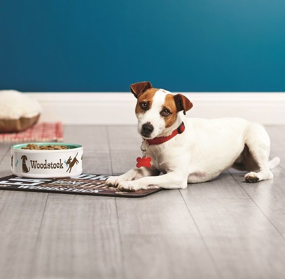 Create a personalized pet products for your fluffy friend