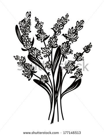 Lavender Flower Vektory a vektorové kliparty | Shutterstock