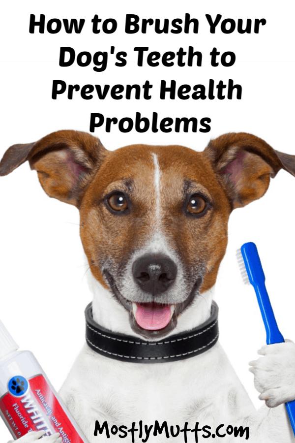 Brush Your Dog's Teeth to Promote Good Health Dog teeth
