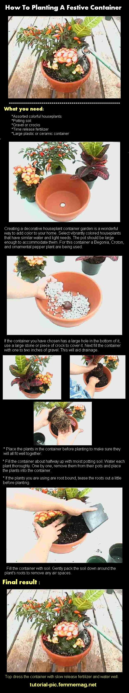 How To Planting A Festive Container | tutorial in picture