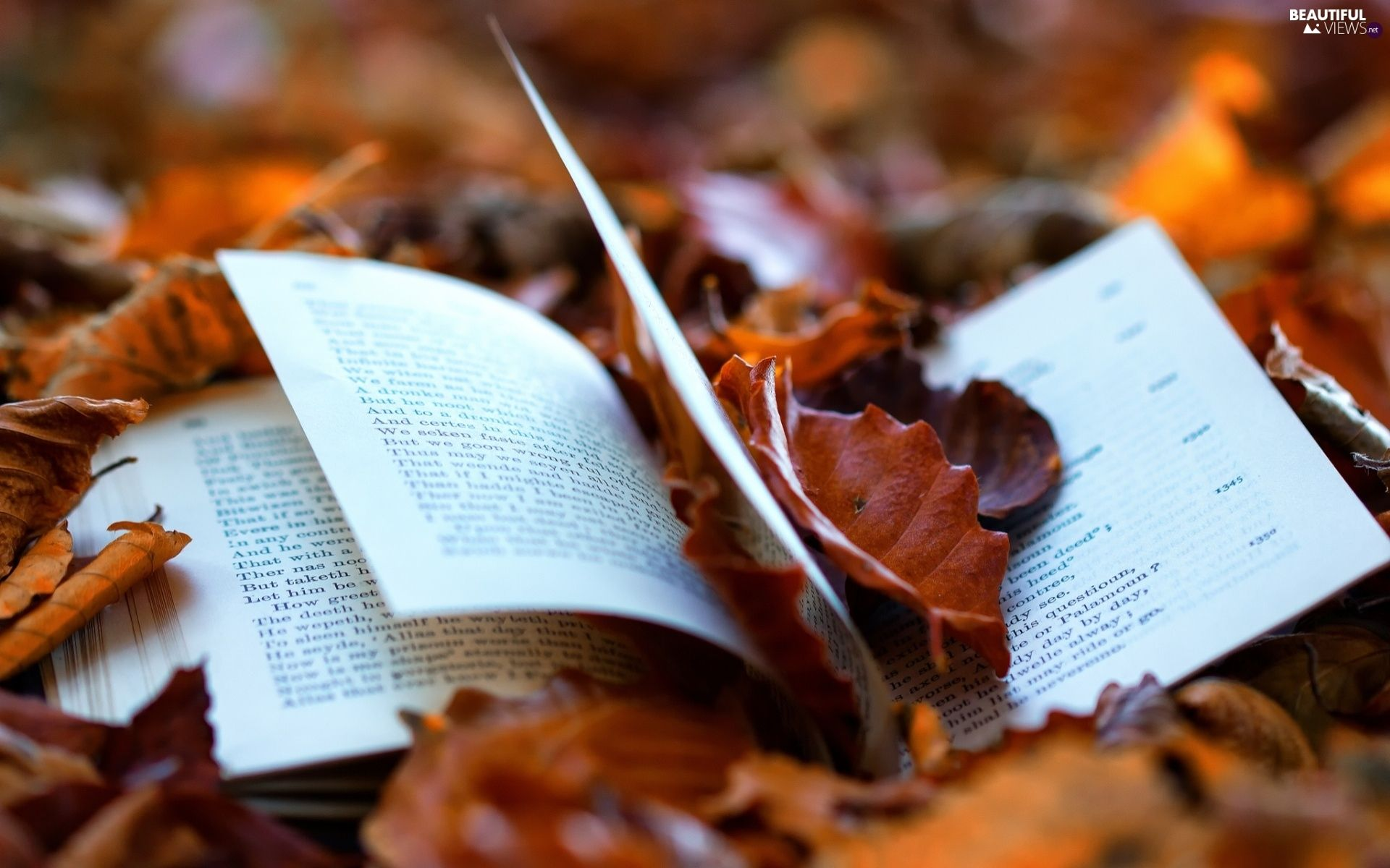 From the book where you might see the beautiful autumn leaves - Book Autumn Google Keres S