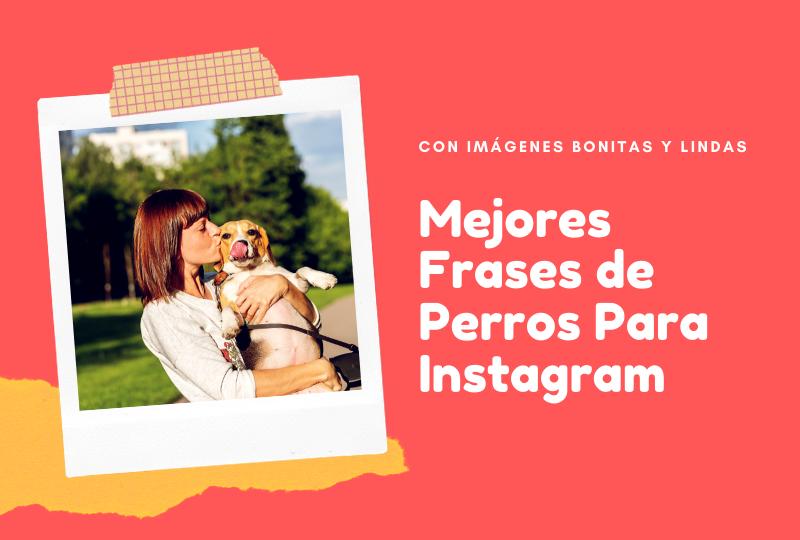 Photo of Frases Perros   Las mejores frases de perro para Instagram (con imágenes bonitas y lindas)