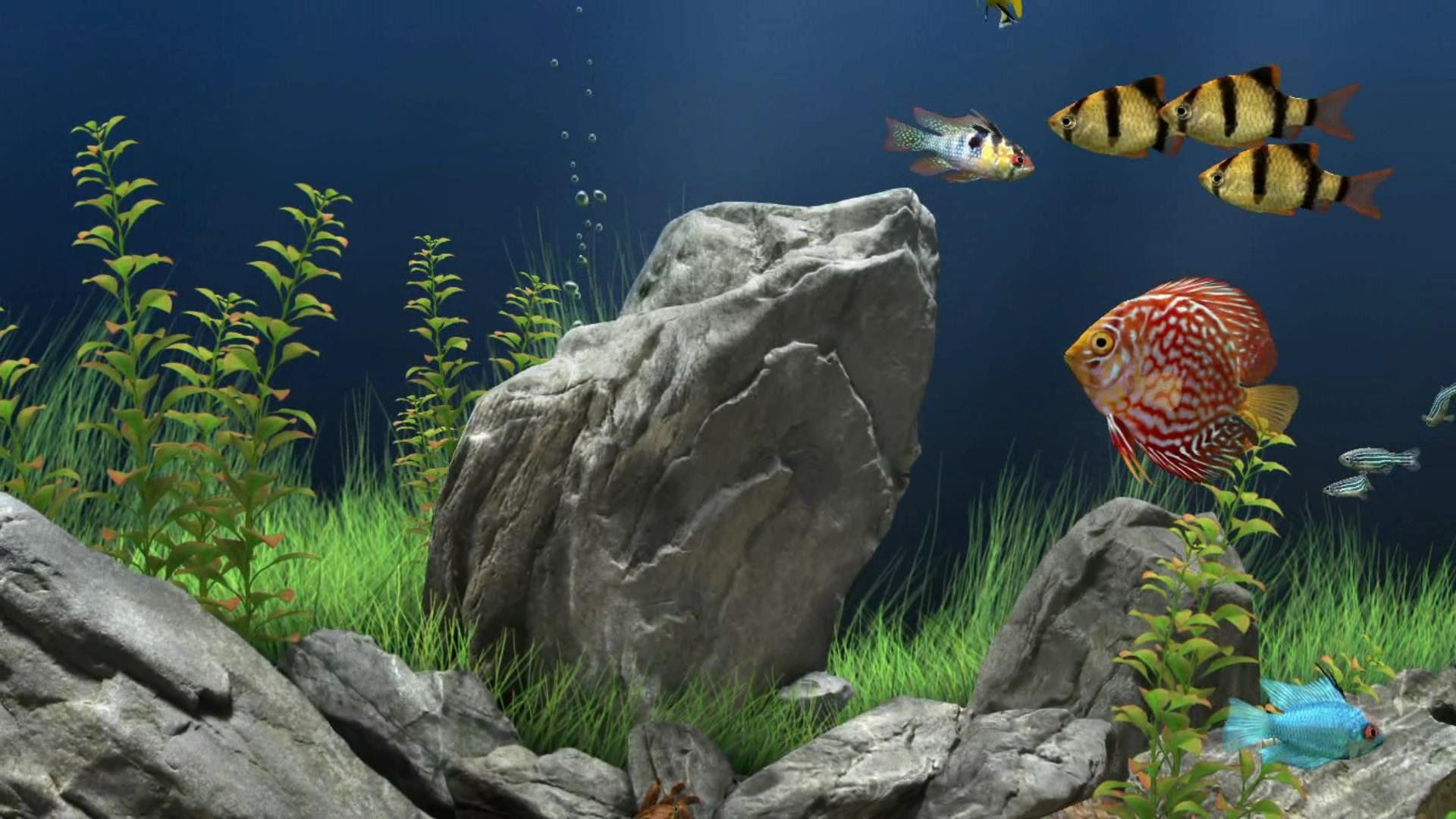 still thinking of you - aquarium - 3d screensaver - piano hd 1080p