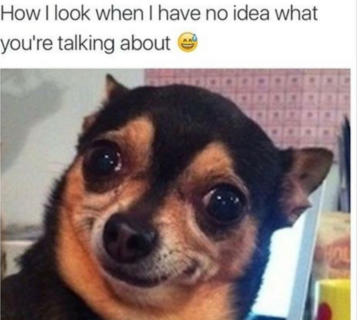 How I look when I have no Idea what you're talking about