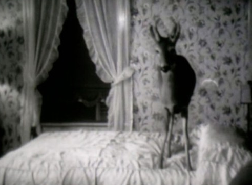 Deer • # 12