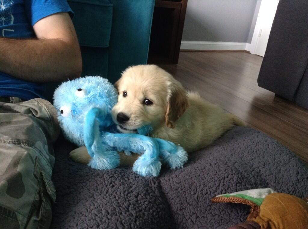 Fox Poo Shampoo Pet Shop Dog Coats Golden Retriever Puppy