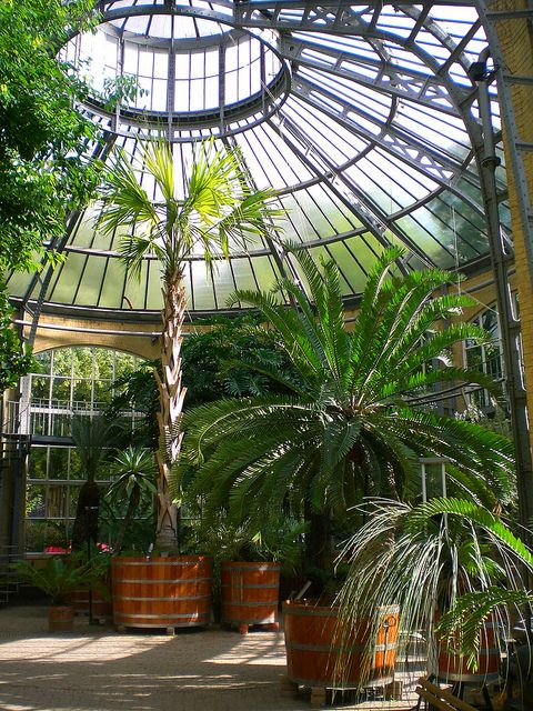 Amsterdam De Hortus Botanicus Palm House 4 Gardens Of The World Amsterdam Netherlands