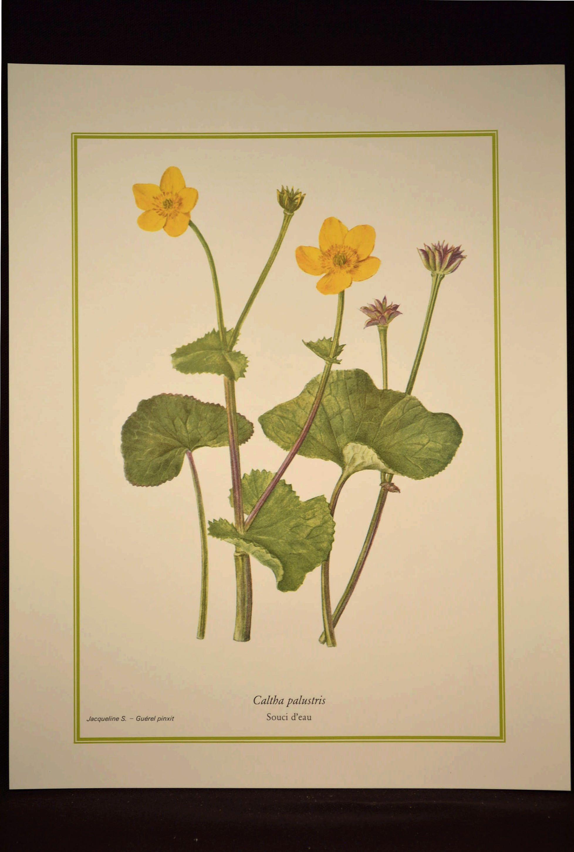 Marsh Marigold Flower Print Yellow Flower Wall Art Print | Nature ...