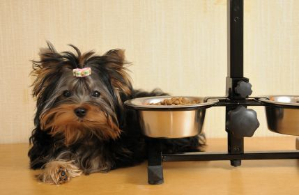 Pancreatitis Diet For Dogs A Guide To The Best Home Made Dog Food