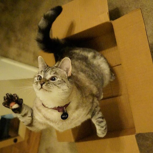 High Five Man Thanks For The Box Cats Cats Kittens