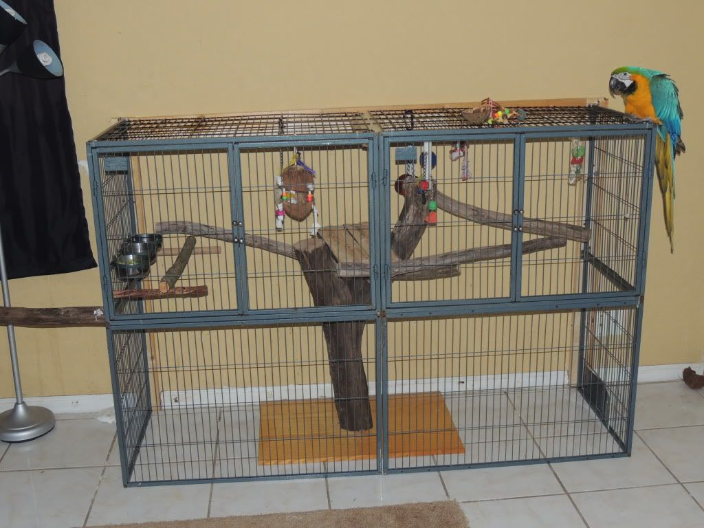 Interesting Home Made Parrot Cage Aviaries Accessories