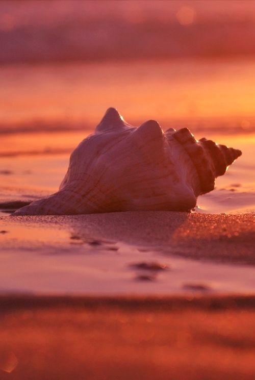 Color Malibu #Rojo #Coral www.facebook.com/malibuespana... Ron de coco  Malibu - Coral - | Live coral, Beach aesthetic, Coral
