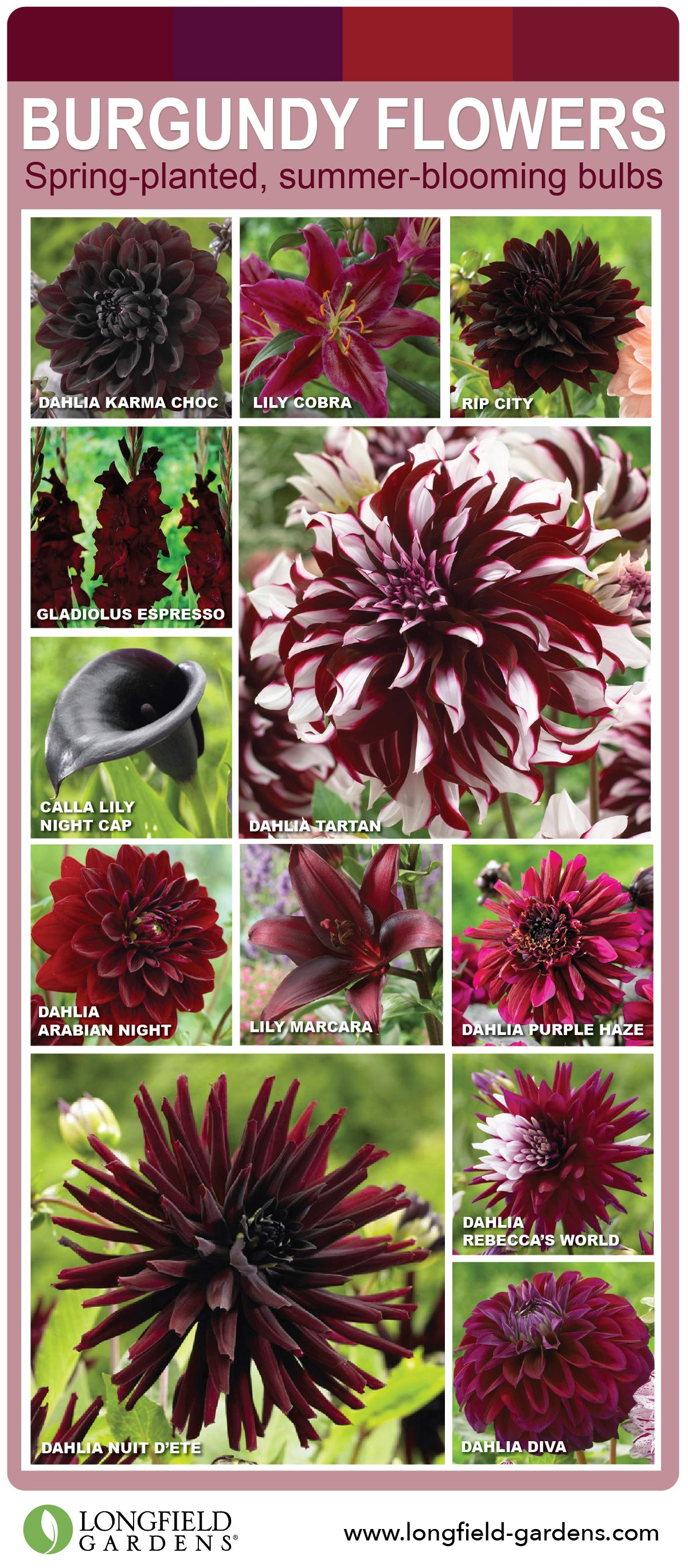 Love Burgundy Flowers  Then this is your pin  Click through to see     Love Burgundy Flowers  Then this is your pin  Click through to see all the  gorgeous burgundy flowers