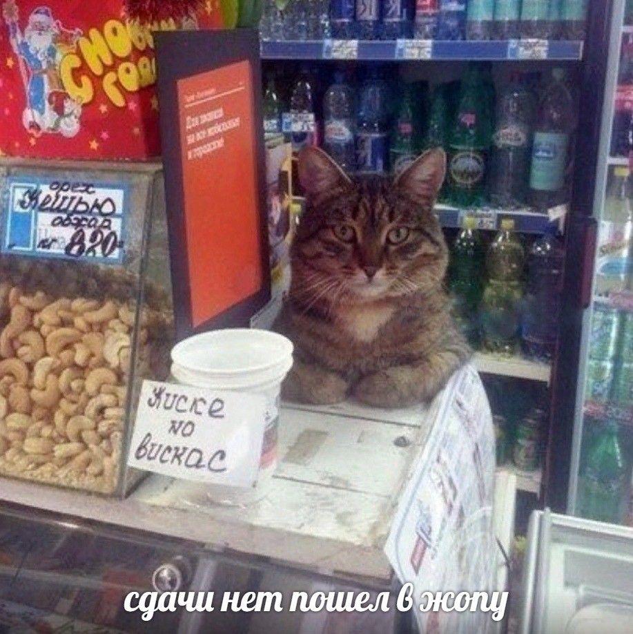 Поздравления, картинки шутки про работу в зоомагазине
