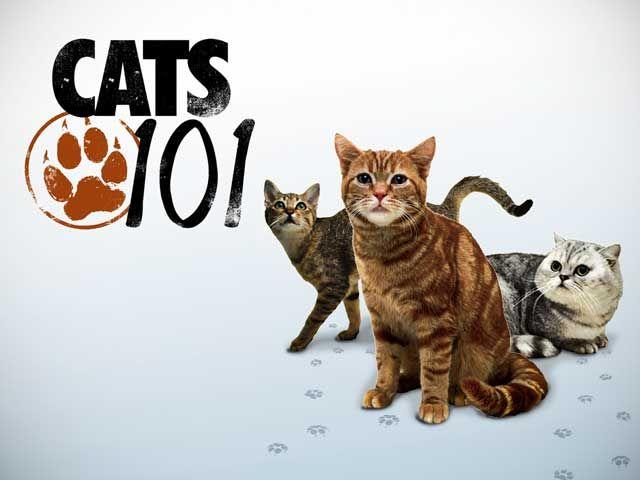 Official Site Nebelung Cat Cats 101 Savanna Cat