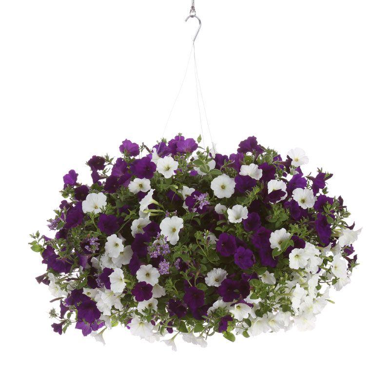 Hanging Basket Combinations