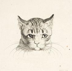 Cat's Head (1796), etching - Johann Heinrich Wilhelm Tischbein (called Goethe-Tischbein)