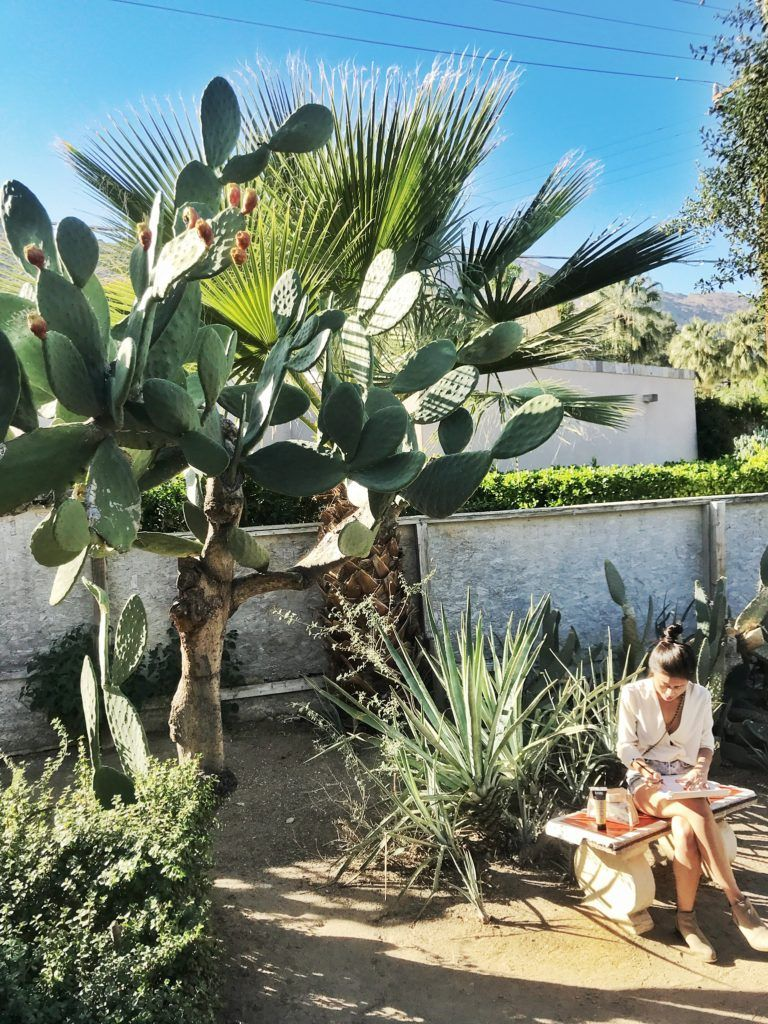 The Most Instagram-Worthy Places in Palm Springs Guide #botanicgarden