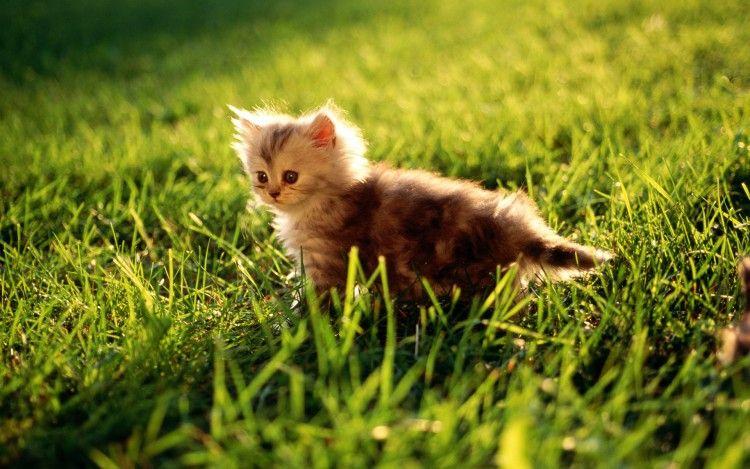Fonds D Ecran Animaux Fonds D Ecran Chats Chatons Chaton Dans La Nature Par Bubulette Hebus Com Animaux Les Plus Mignons Animales Chatons Duveteux