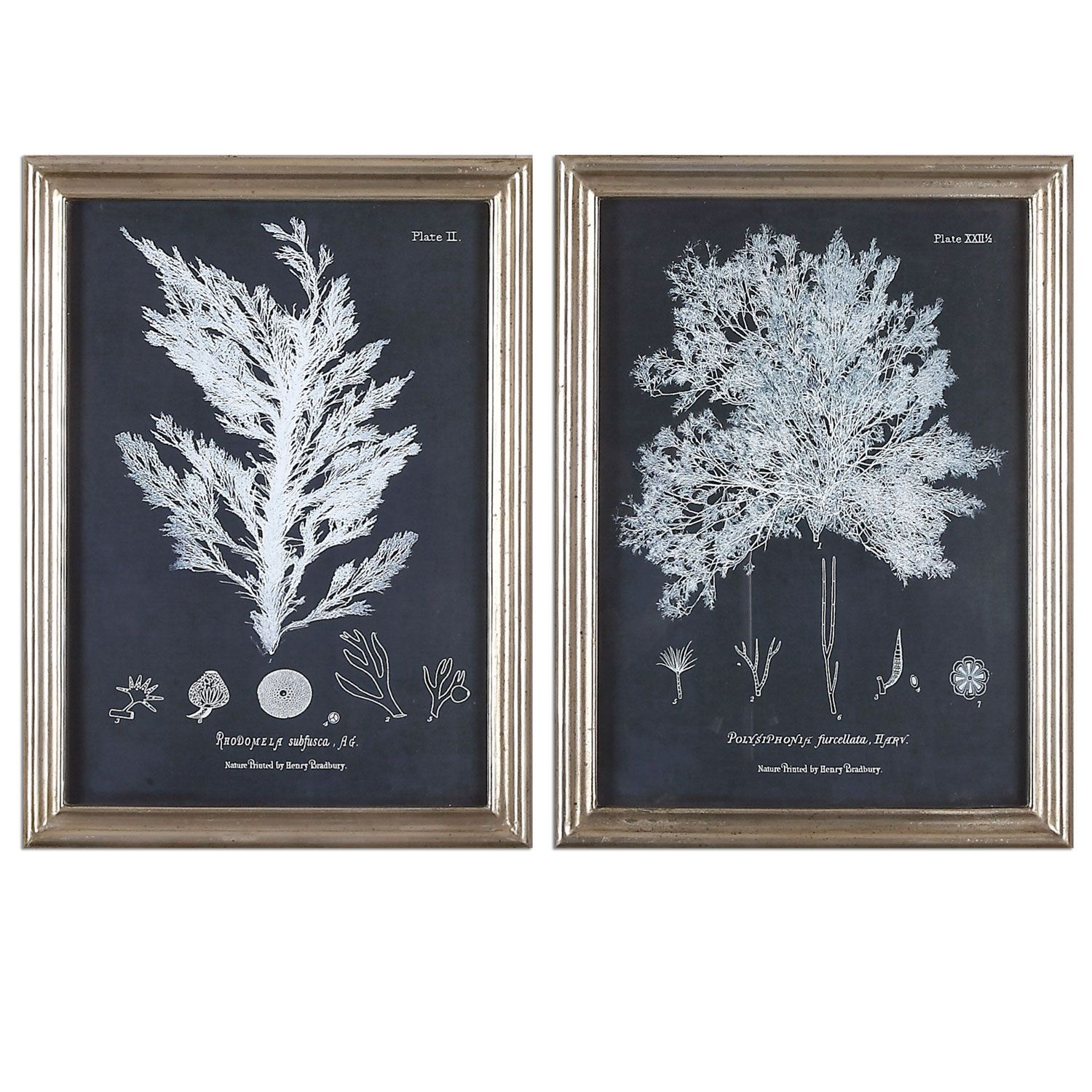 Uttermost blue coral art on sale now guaranteed low prices