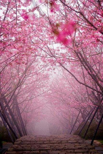 fond d 39 cran paysage rose fleuri fond d 39 cran pinterest cran fleuri et roses. Black Bedroom Furniture Sets. Home Design Ideas