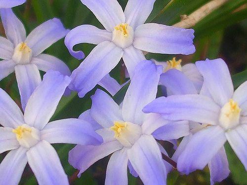 Purple Flowers by ♡♥Ashlynn's Dreaming♥♡, via Flickr