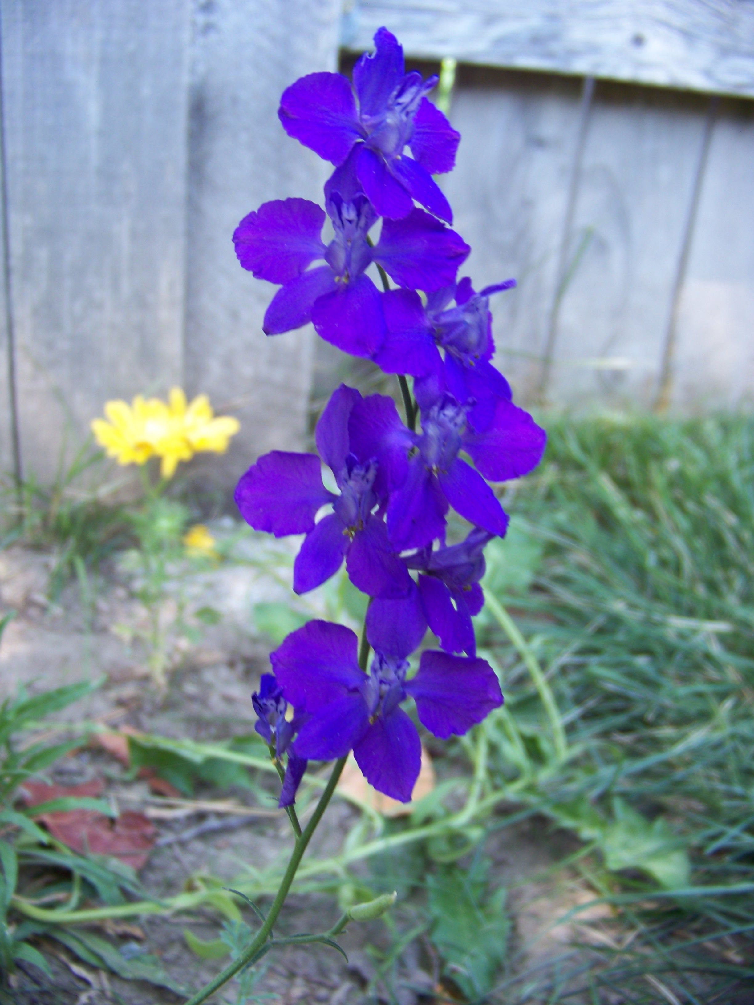 another flower from the back yard last summer