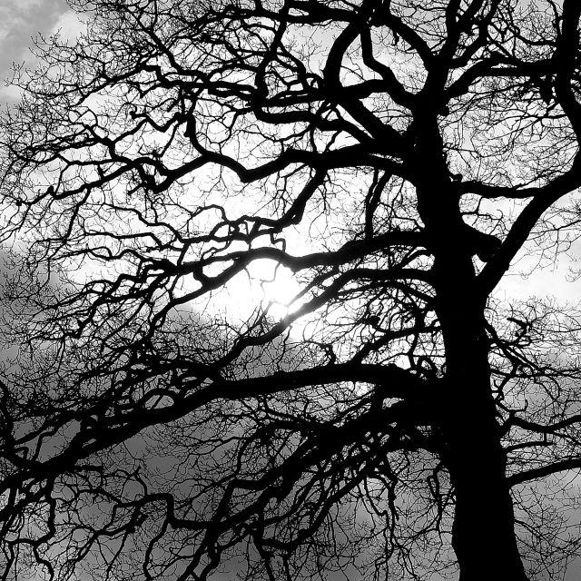 Windermere tree