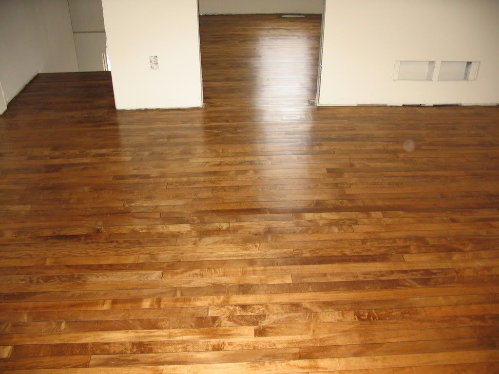Maple floor with a dark stain love it good discussion for Staining hardwood floors
