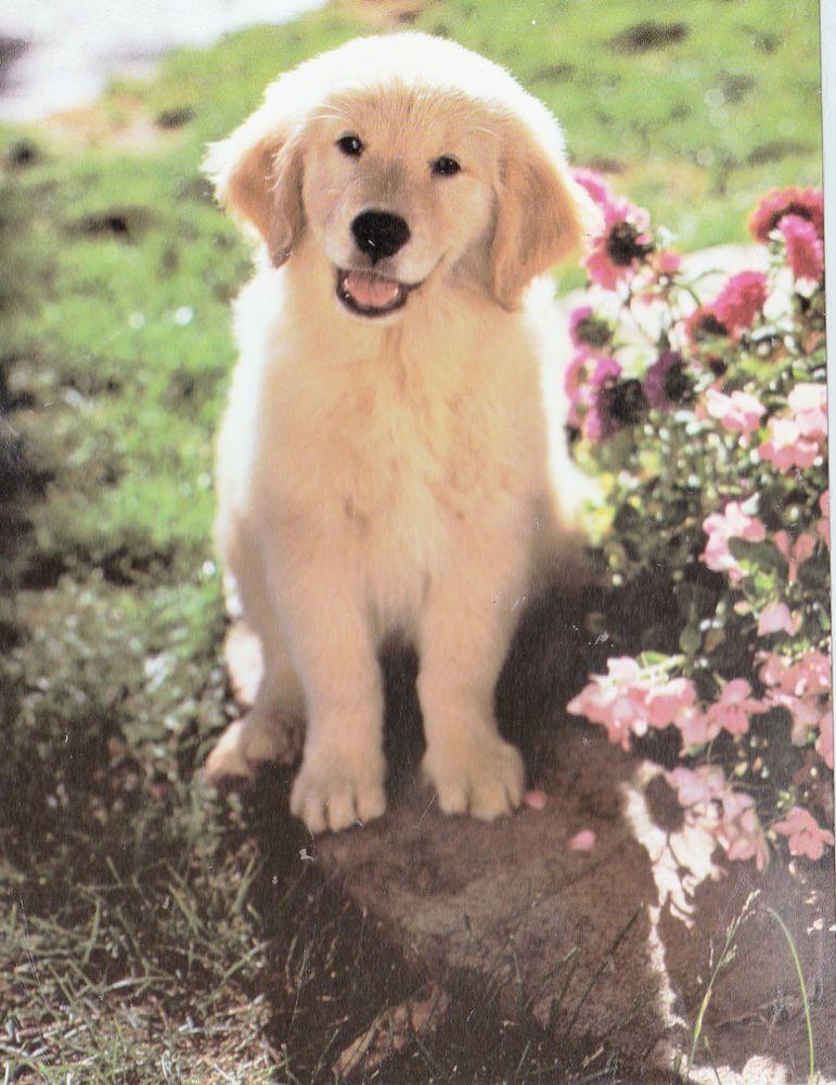 Kids Scrapbooking Collectible Puppy W Flowers STICKER Decal Animals Retrievers