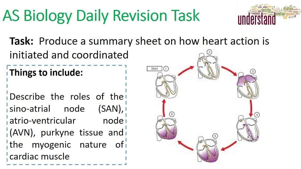 Pin On As Biology Revision Tasks
