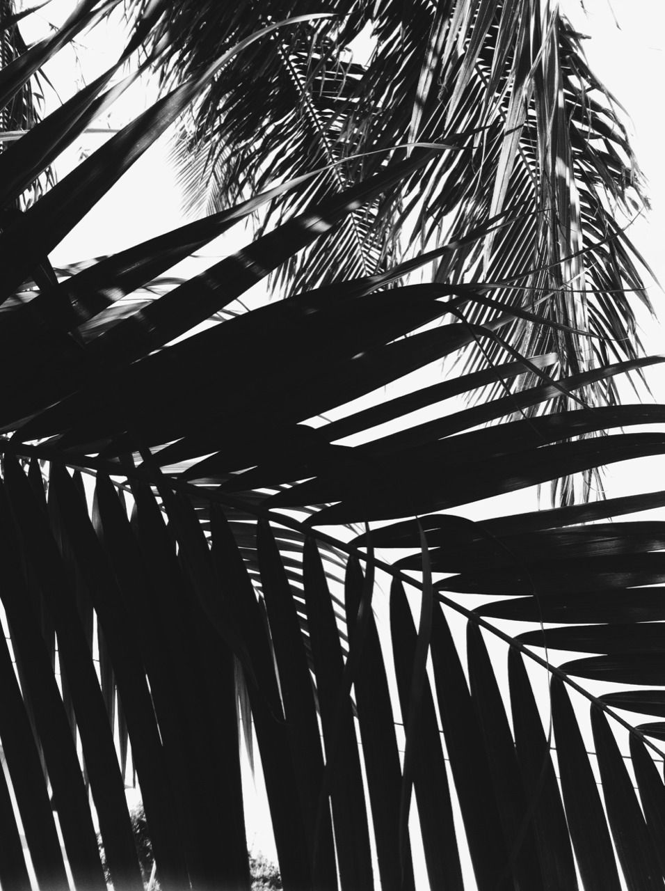 Black n white black and white leaves black and