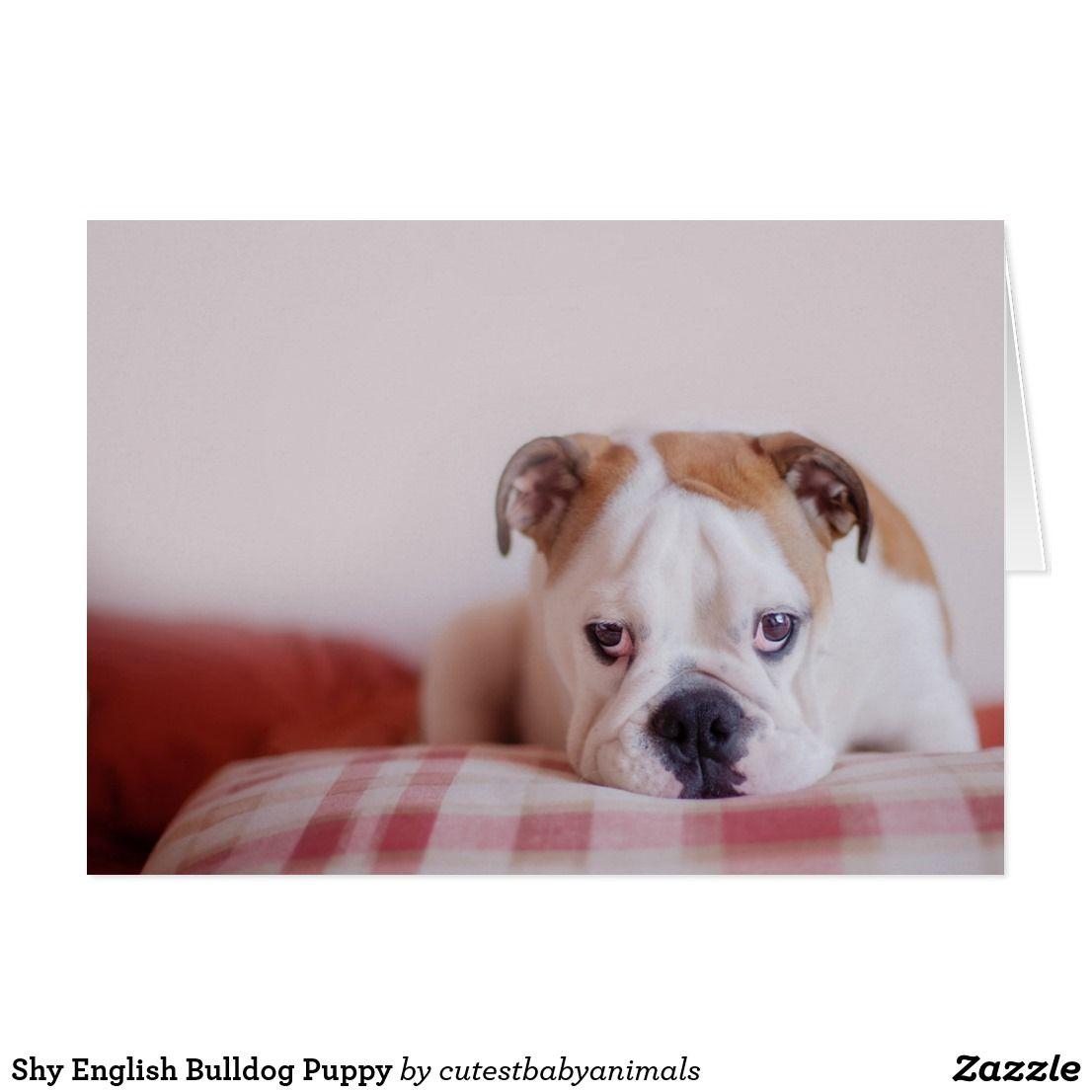 Shy English Bulldog Puppy Zazzle Com Bulldogs German Shepards